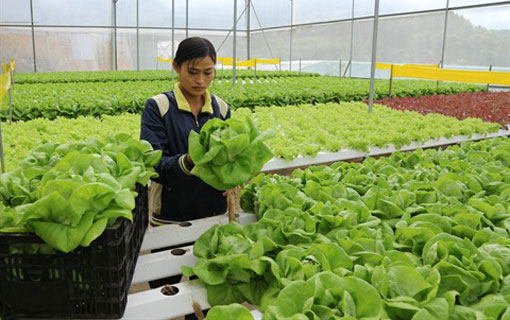 Le bio futur terrain de coop ration entre isra l et le for Chambre de commerce vietnam