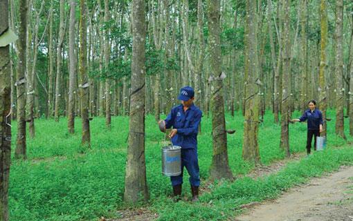 Caoutchouc - Le Groupe de l'industrie du caoutchouc du Vietnam (VRG) s'oriente vers le développement durable