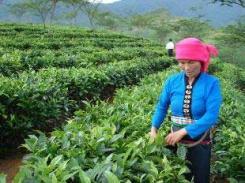 Vitry-sur-Seine - La carte vietnamienne du 94 pour sauver le thé Eléphant