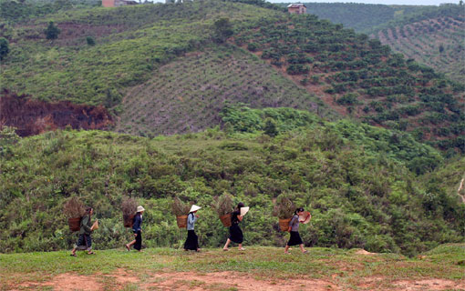 L'enchantement des hauts plateaux du Vietnam