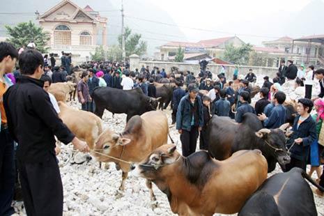 Le Marché aux bestiaux de Meo Vac